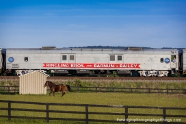 """A horse races the cars on the last Ringling Brothers and Barnum and Bailey Circus train as an onlooker from the train takes in the scenery as the """"Greatest Show on Earth"""" heads to it's final stop in 147 years."""