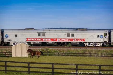 "A horse races the cars on the last Ringling Brothers and Barnum and Bailey Circus train as an onlooker from the train takes in the scenery as the ""Greatest Show on Earth"" heads to it's final stop in 147 years."